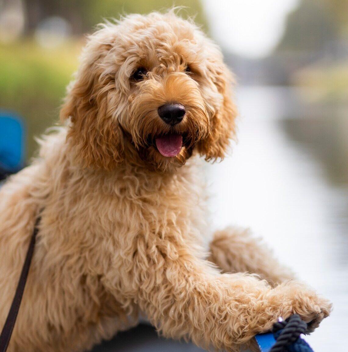 Hond aan boord zij Zelf Varen Den Bosch